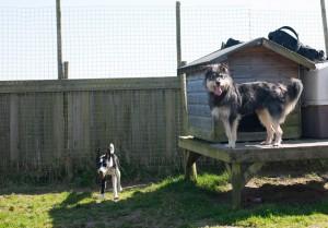 Sonny and Loki